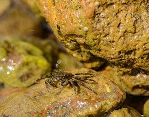 From above of single wet crab on slippery brown rocks in soft light