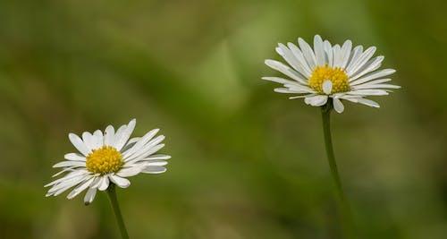Gentle daisies in green nature