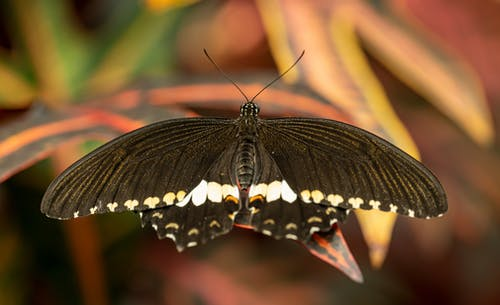 Black and White Butterfly on Brown Leaf in Close Up Photography