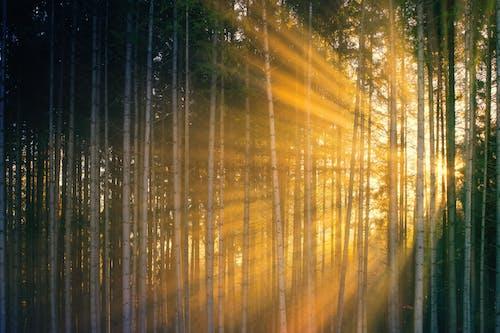 Imagine de stoc gratuită din apus, apus de soare, arbore