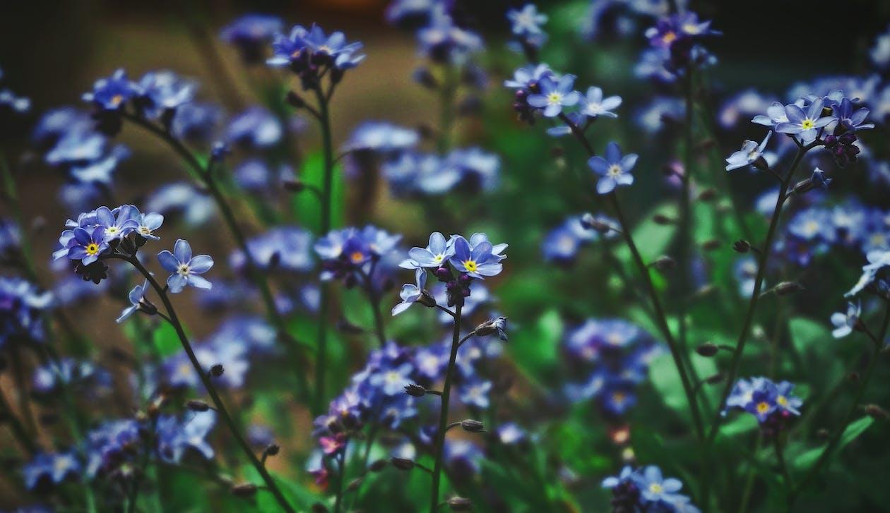 Gratis lagerfoto af blomster, blomstrende, blomstrende planter