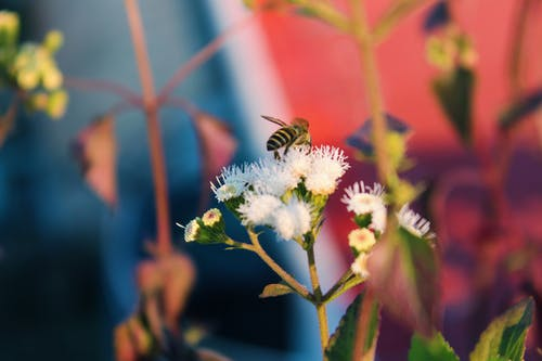 Free stock photo of bee, bees, flower