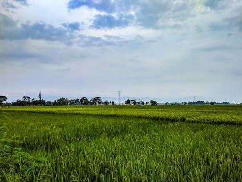Well groomed green farm field during  sundown