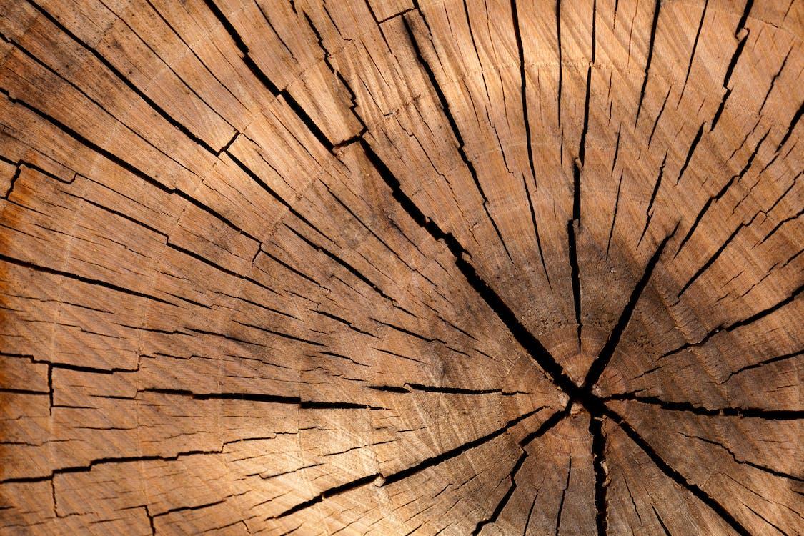 batang pohon, kayu, permukaan