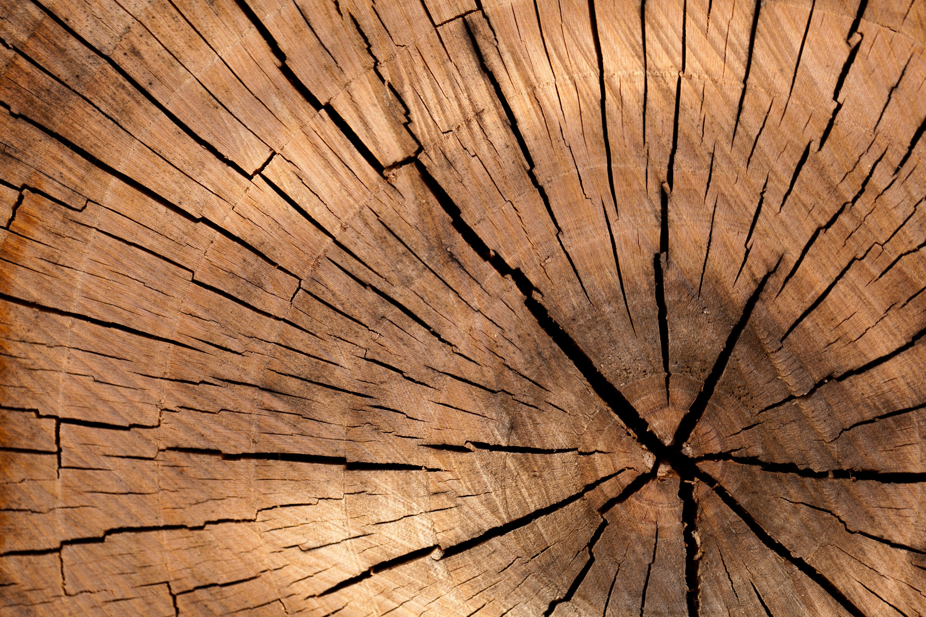 closeup photography of brown wood slice free stock photo
