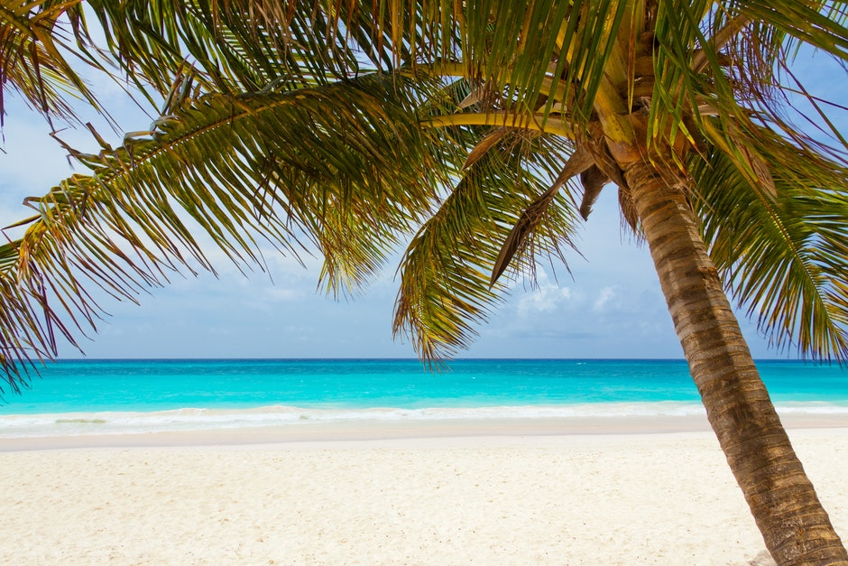 Foto de uma palmeira em um praia