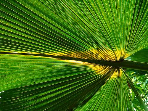 Photos gratuites de botanique, brillant, couleurs, croissance