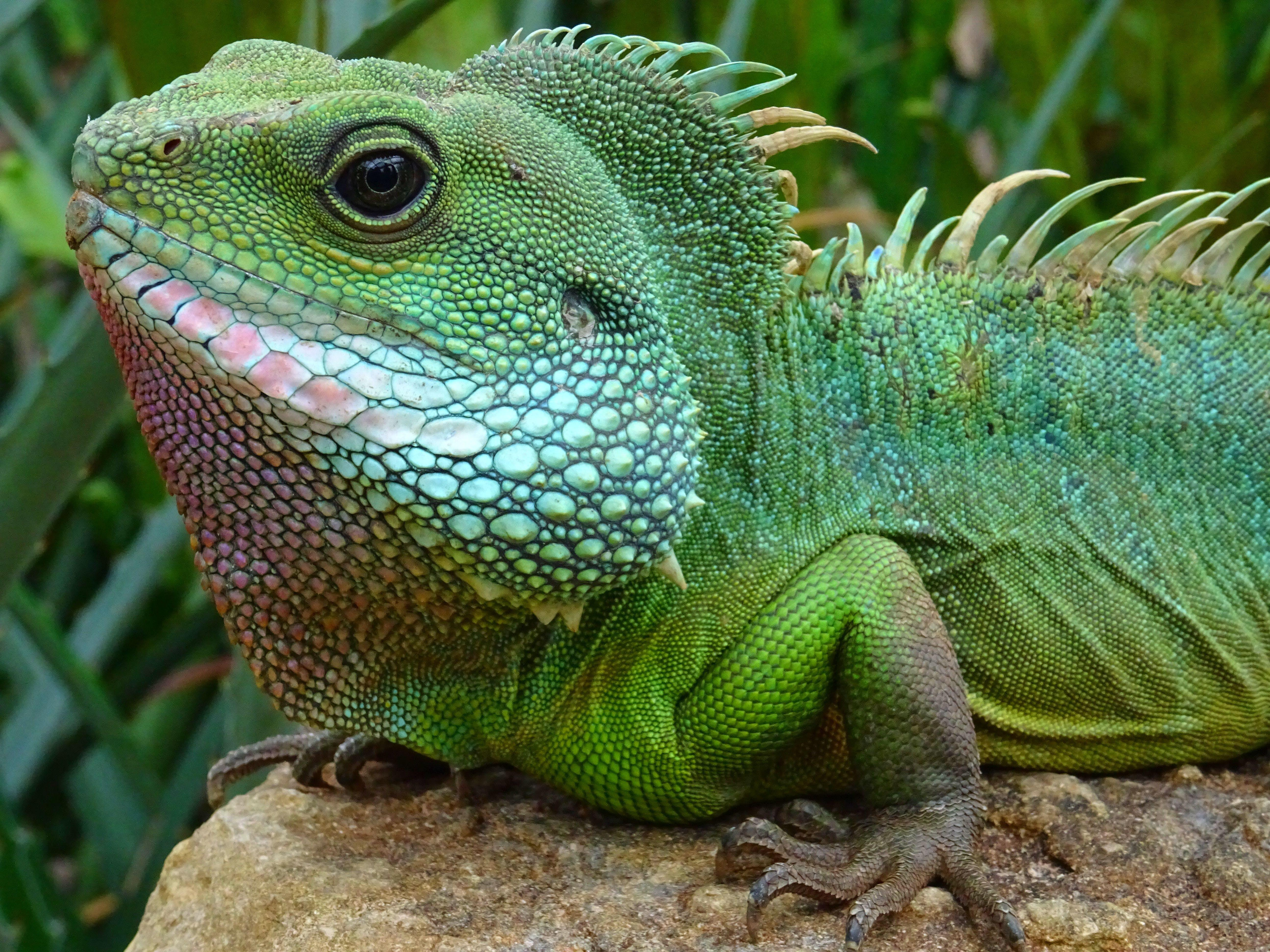 녹색, 눈, 도마뱀, 동물의 무료 스톡 사진