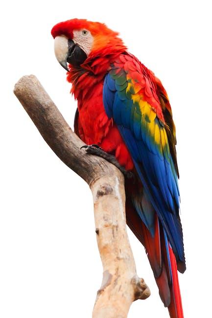 Aves - alimentos tóxicos