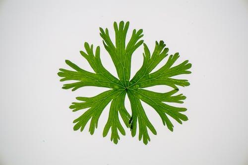 Gratis stockfoto met alleen, biologie, blad, bladeren