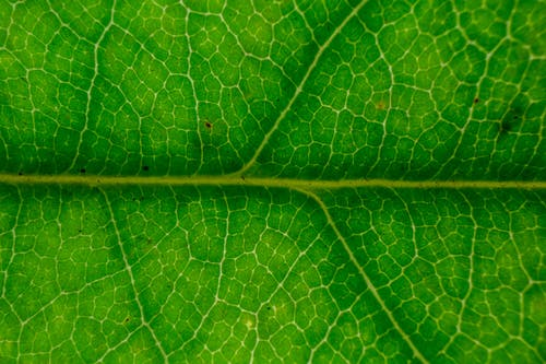 Rough surface of fresh green leaf