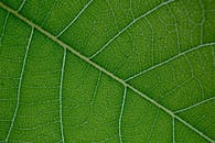 Macro structure of textured green leaf