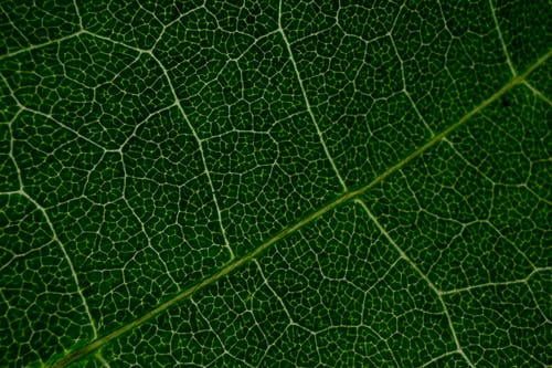 Rough texture of underside of green leaf