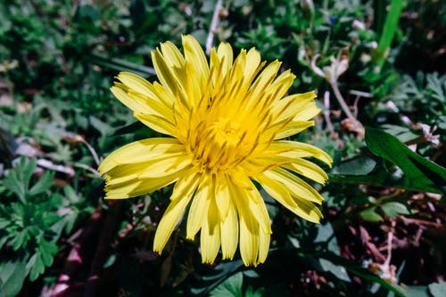 Close-Up Photo Of Yellow Flower
