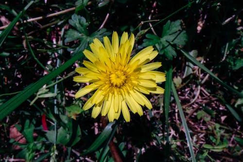 Gratis stockfoto met bloeien, bloeiend, bloem