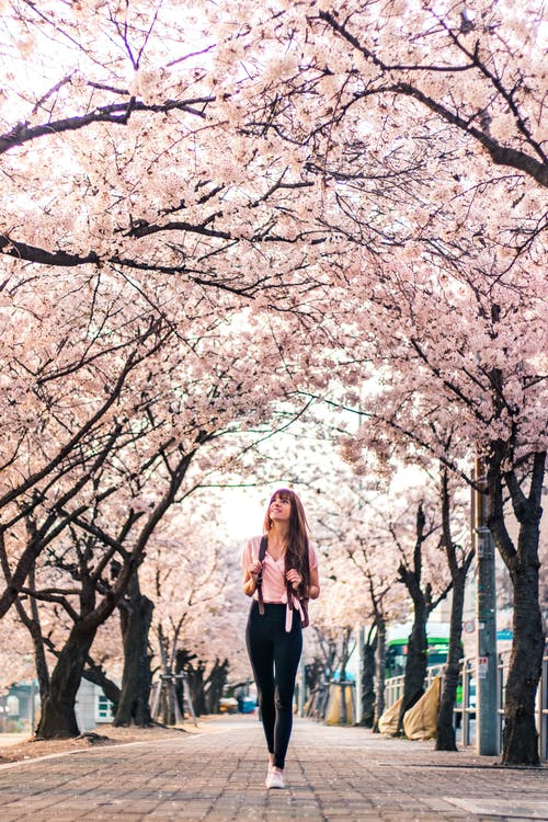 Woman in Black Jacket Standing Under White Cherry Blossom Tree