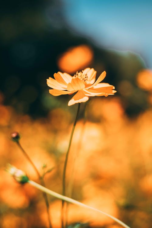 Foto profissional grátis de ao ar livre, atraente, beleza, bonito