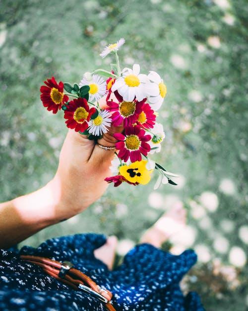 คลังภาพถ่ายฟรี ของ จับ, ดอกคาโมไมล์, ดอกไม้