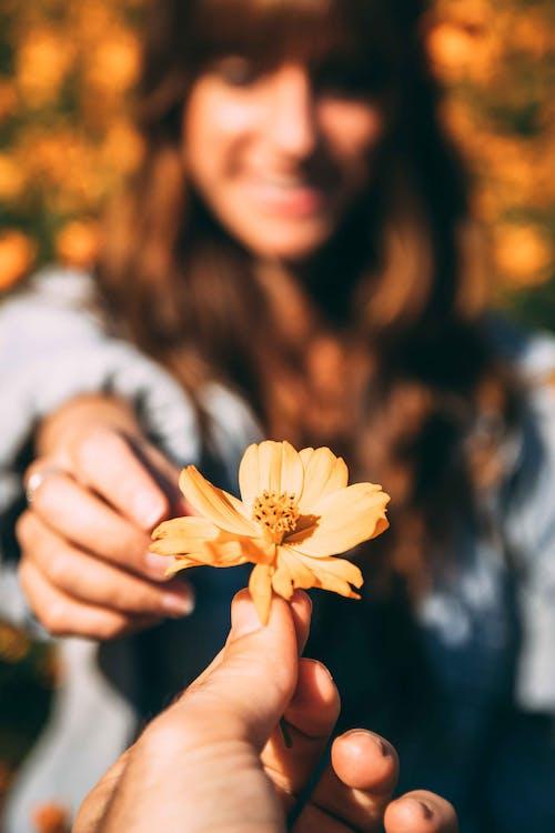 Immagine gratuita di avvicinamento, delicato, fiore