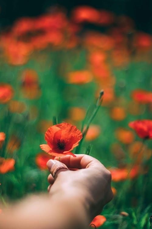 คลังภาพถ่ายฟรี ของ ความชัดลึก, จับ, ดอกส้ม