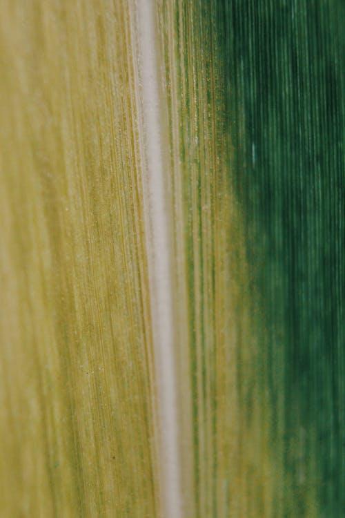 Základová fotografie zdarma na téma abstraktní, design, dřevo, drsný