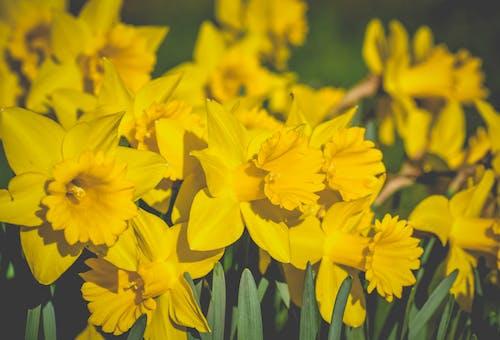 Ảnh lưu trữ miễn phí về ánh sáng mặt trời, cánh đồng, cánh hoa