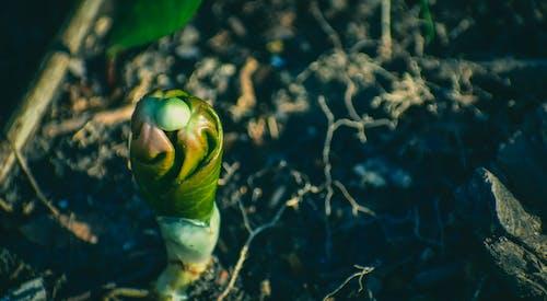 คลังภาพถ่ายฟรี ของ กลางแจ้ง, ก้านดอก, การเจริญเติบโต