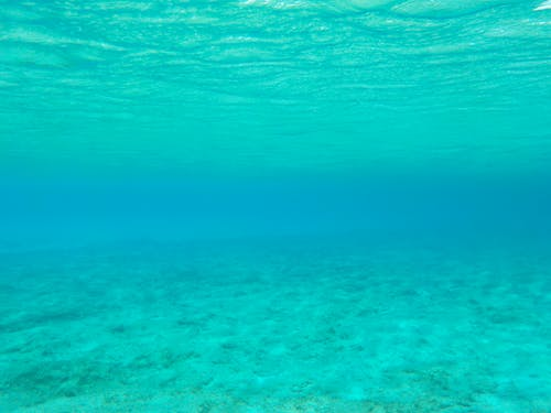 Free stock photo of blue water, dive, scuba diver