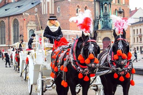 Immagine gratuita di carrozza, cavalleria, cavalli