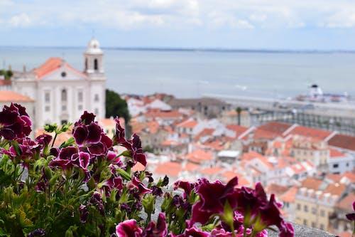 Free stock photo of city photography, destination, Lisboa