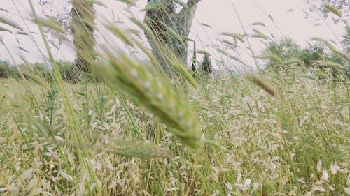 Free stock photo of farm field, fields, green background