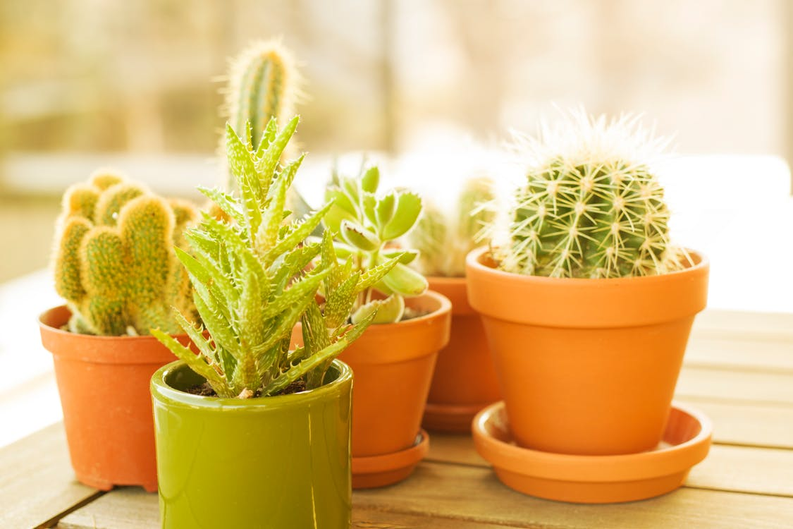 Variety Of Green Cactus in Brown Clay Pots