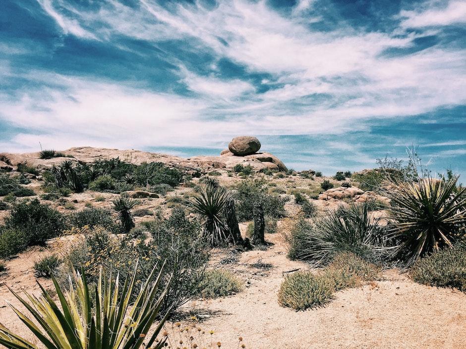 agave, arid, blue sky