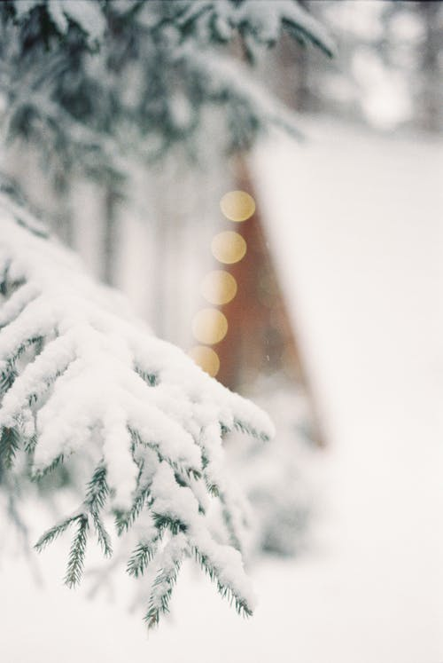 Snow Covered Tree Branch