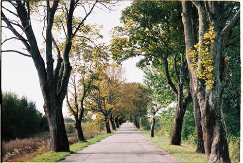 ağaçlar, asfalt yaya yolu, asfalt yürüyüş yolu içeren Ücretsiz stok fotoğraf
