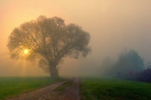 Bright sun shining through fog and big tree in peaceful park during dawn