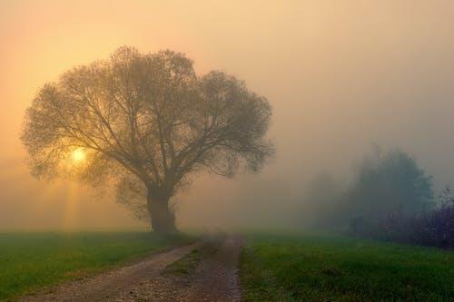 Sunrise over green park in fog