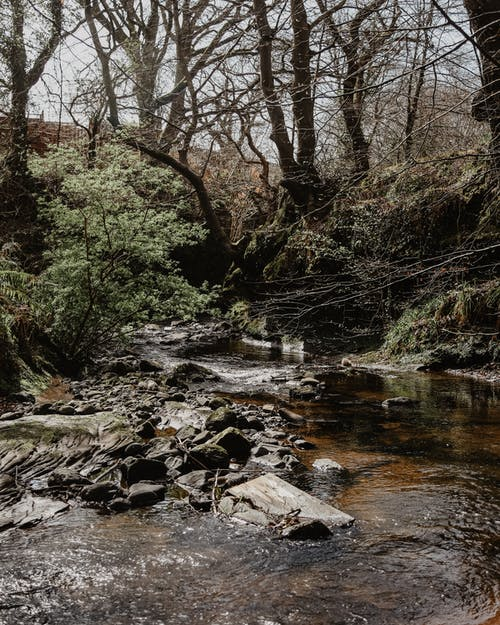 Free stock photo of #outdoorchallenge, forest, river, riverside