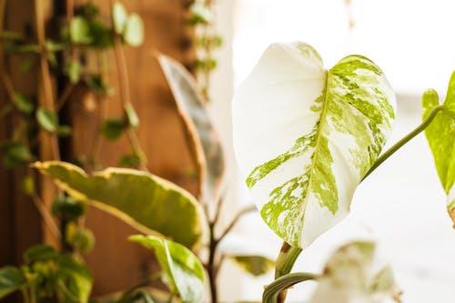 Immagine gratuita di concentrarsi, crescita, deliciosa