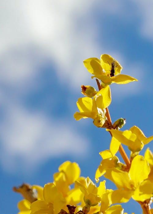 Gratis stockfoto met beest, bestuiving, blauwe lucht, bloeien