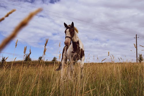 Photo Of Horse On Grassfield