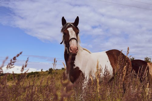 Free stock photo of animal photography, horse, lithuania