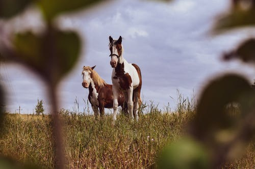 Photo Of Horses On Grass Field