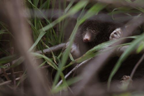 Free stock photo of mole, moles