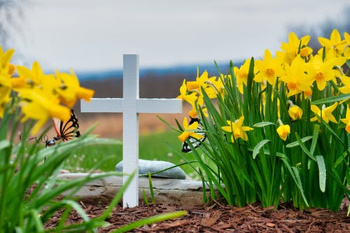 Christian cross surrounded by daffodils