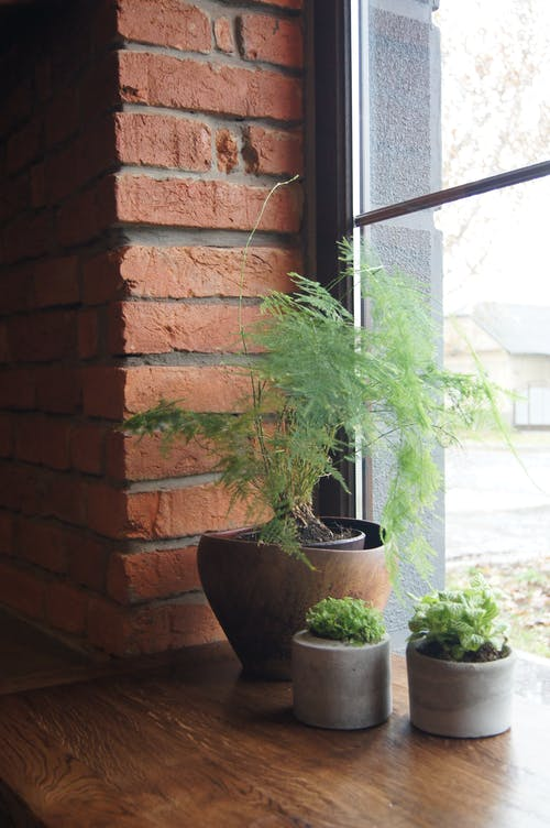 Interior of bright room with brick walls and green plants in pot in daylight