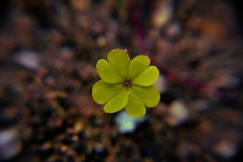 Безкоштовне стокове фото на тему «quatrefoil, везіння, елемент, зелена квітка»