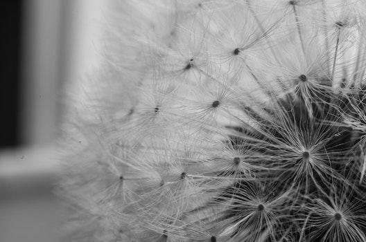 Free stock photo of flowers, pattern, blur, white
