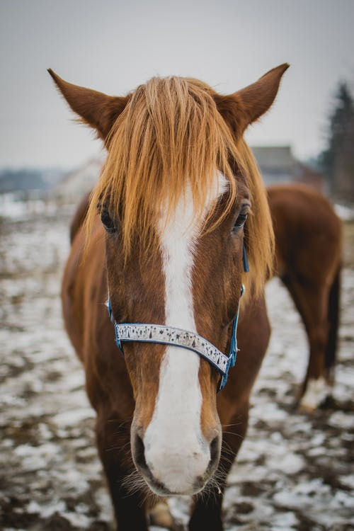 Close-Up Shot of a Brown Horse
