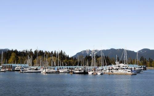 Speedboats Docked on a Port